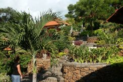 north-bali-lovina-hotel-resort-for-sale-garden