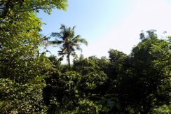 bali-seaview-land-for-sale