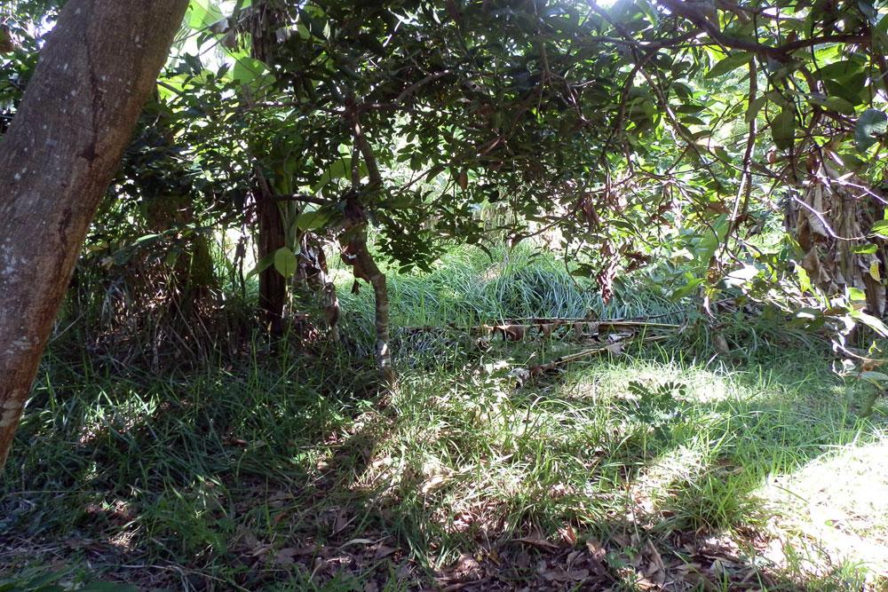 Bali land for sale Lovina NB-V029