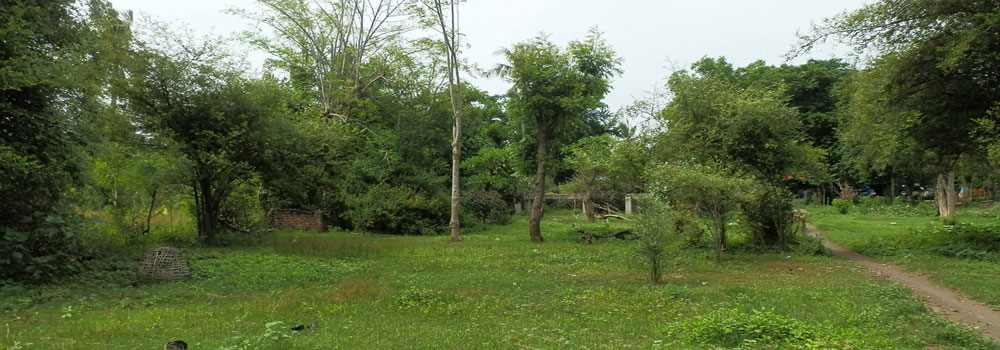 bali land for sale pemuteran