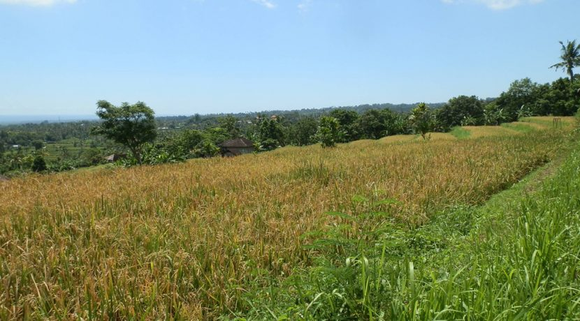 bali-land-for-sale-cheap-coast-view