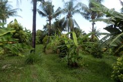 bali-land-for-sale-cheap-lower-land