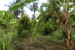 bali-land-for-sale-cheap-lower-land2