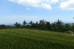 bali-land-for-sale-cheap-rice