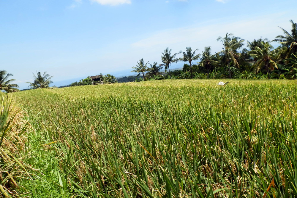bali land for sale cheap with ocean view