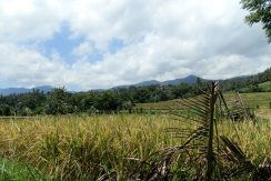 bali-land-for-sale-cheap-rice-terrace
