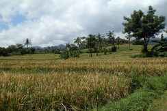 bali-land-for-sale-cheap-terraced-land