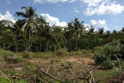 north-bali-beachfront-land-for-sale2