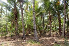 north-bali-beachfront-land-2