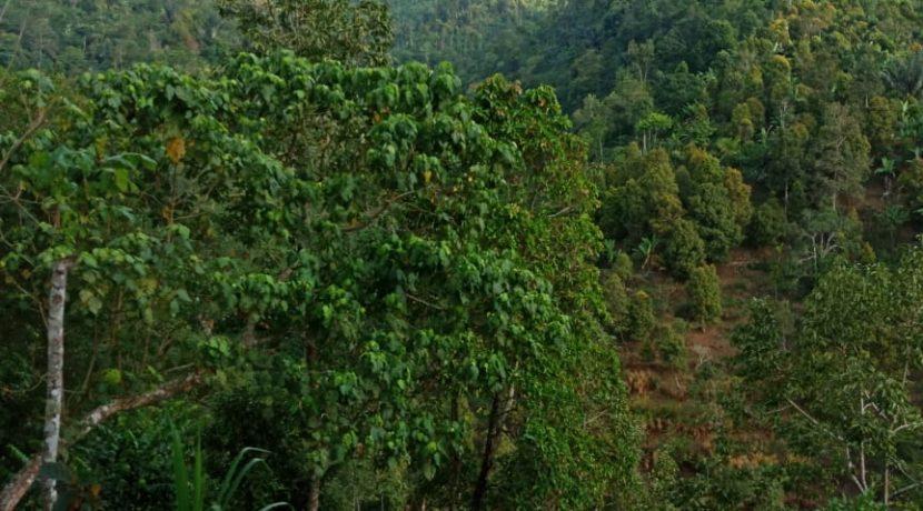North-bali-hillside-land-for-sale-1