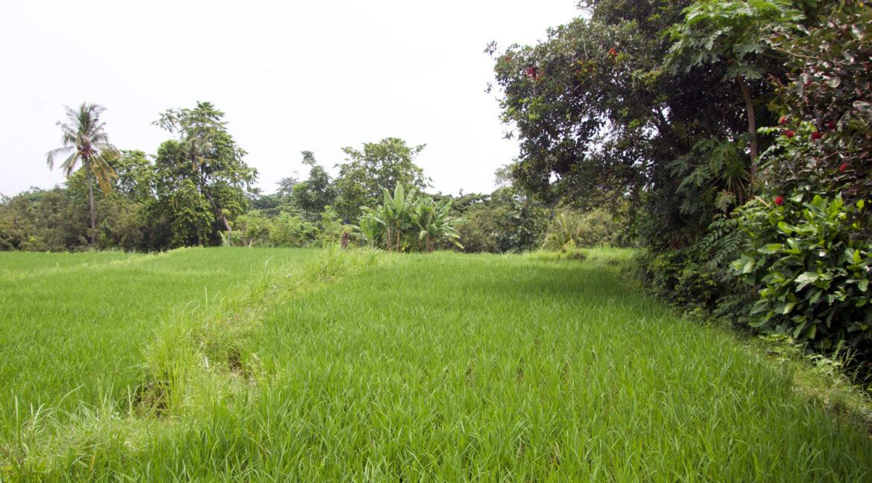 bali-ocean-view-land-green