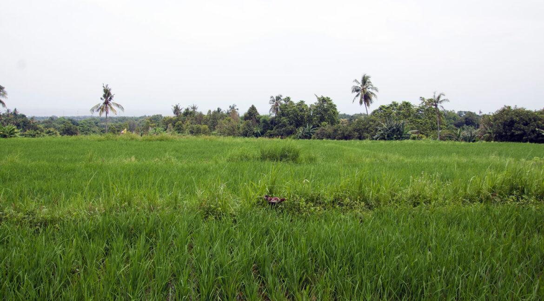 bali-ocean-view-land-rice