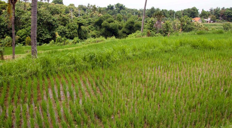 bali-ocean-view-land-terraced