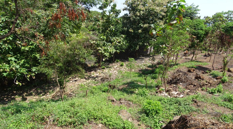 north-bali-hillside-sea-view-land-sale-11