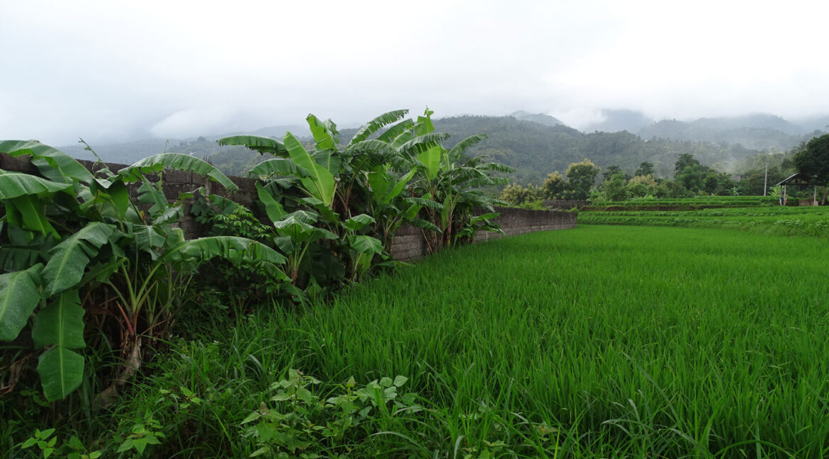 north-bali-land-with-view-8