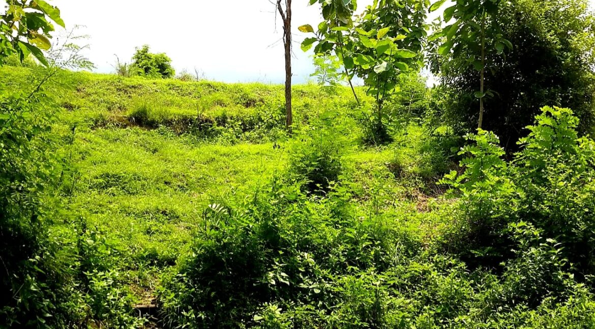 north-west-bali-land-for-sale-1