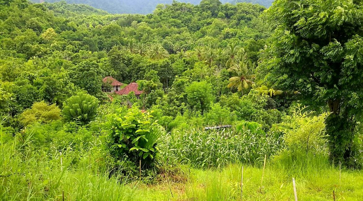 north-west-bali-land-for-sale-10