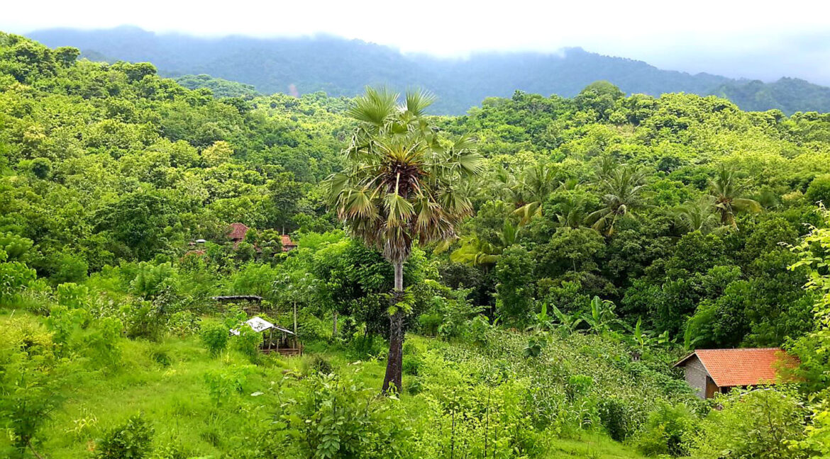 north-west-bali-land-for-sale-11