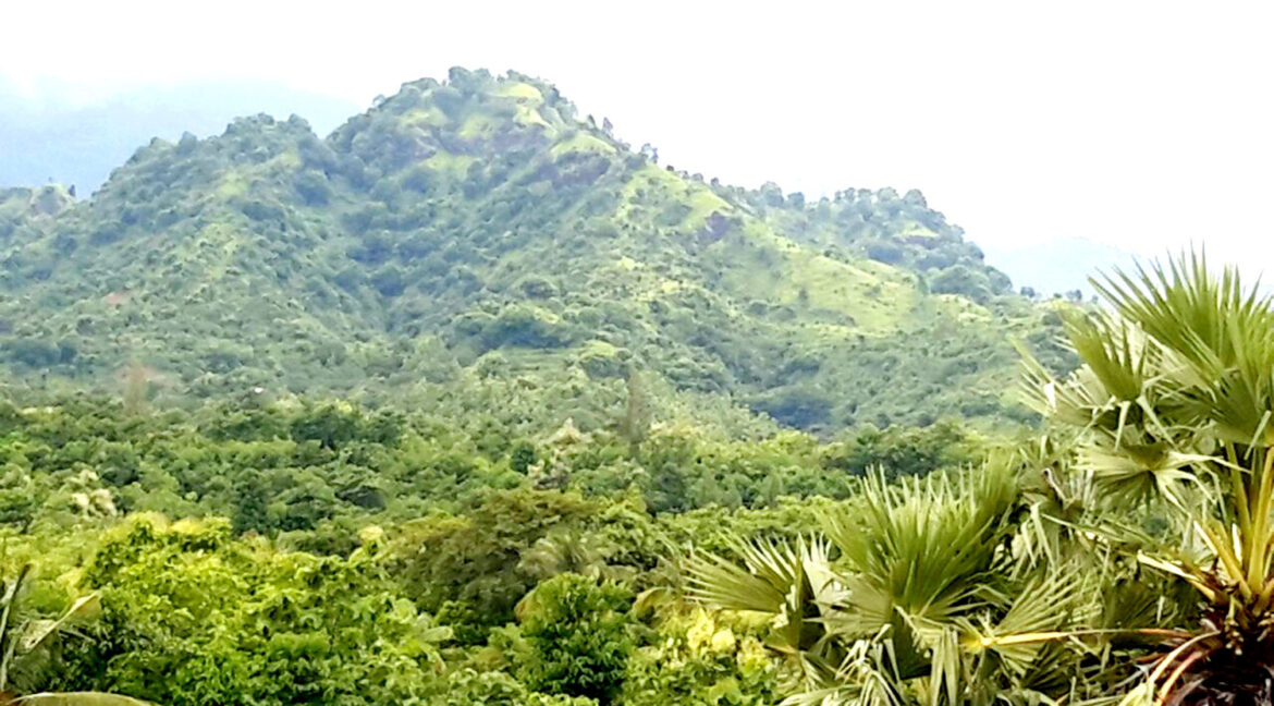 north-west-bali-land-for-sale-13