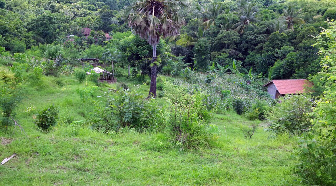 north-west-bali-land-for-sale-15