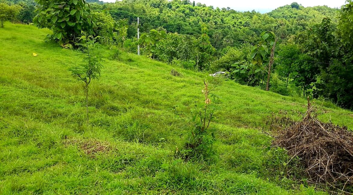 north-west-bali-land-for-sale-21
