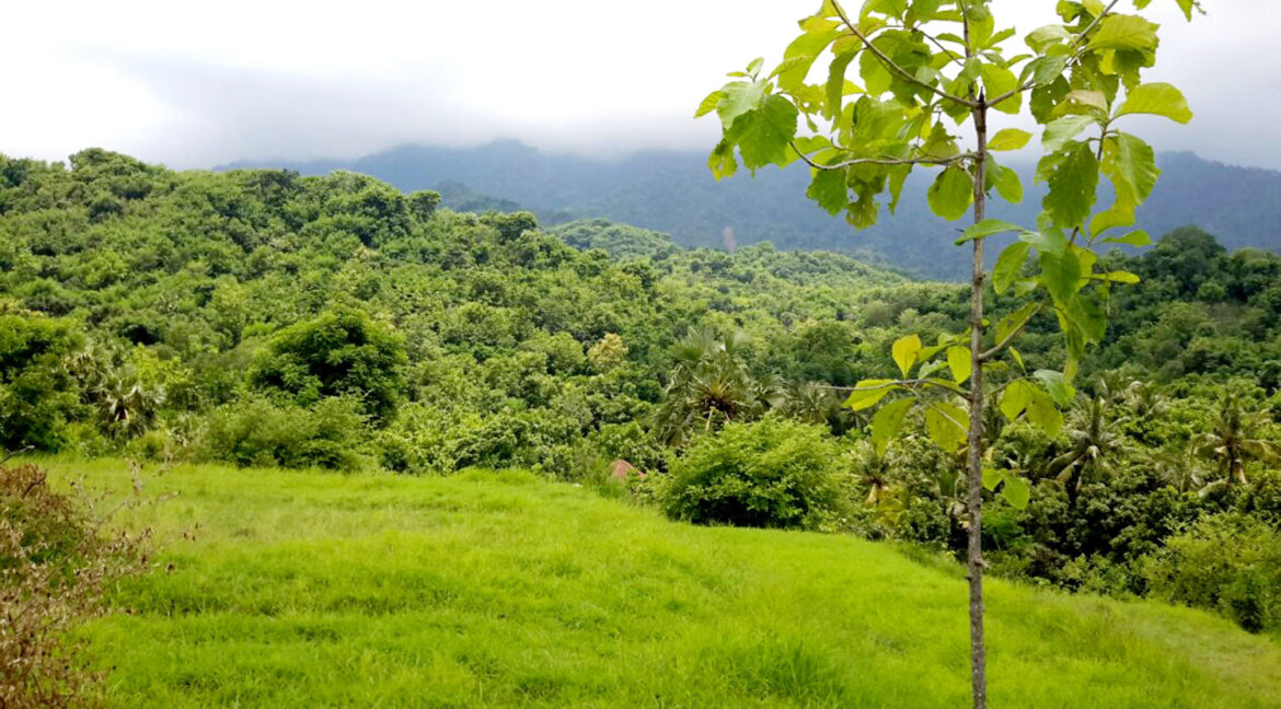 north-west-bali-land-for-sale-4